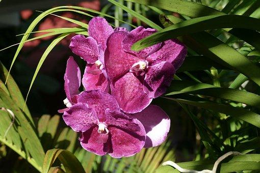 Flower, Nature, Plant, Leaf, Garden, Petal, Summer