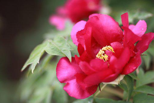 Nature, Plants, Flowers, Garden, Leaf, Flower Garden