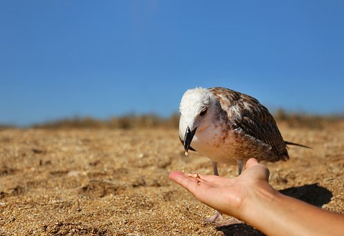 Nature, Bird, Seagull