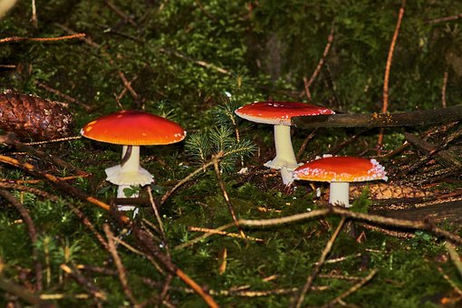 Mushroom, Toadstool, Rac, Nature, Autumn, Cap, Season
