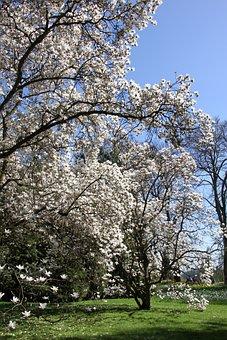 Season, Cherry Wood, Flower, Spring, Garden, Sunny