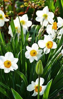 Nature, Spring, Flowers, Sun