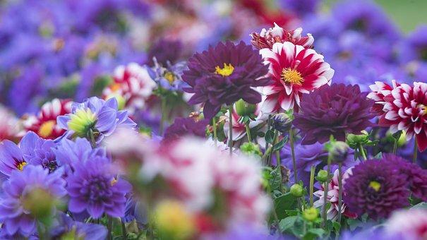 Flower, Plant, Nature, Garden, Summer, Park, Leaf