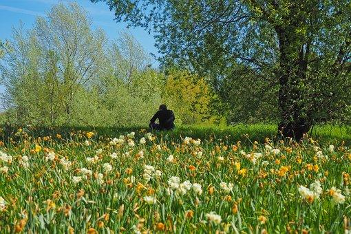 Flowers, Nature, Landscape, Grass, Plant, Summer