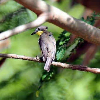 Bird, Wildlife, Nature, Animal, Wild, Outdoors, Tree