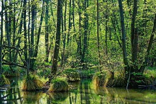 Nature, Wood, Spring, Landscape, Tree, Leaf, Waters