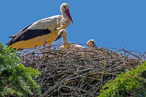 Spain, Madrid, Manzanare, White Stork, Birding, Nature