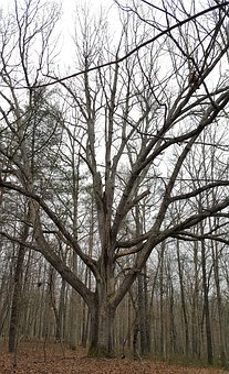 Tree, Wood, Branch, Winter, Nature