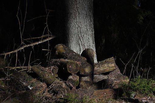 Wood, Tree, Nature, Outdoor, Environmental, Bladmossor