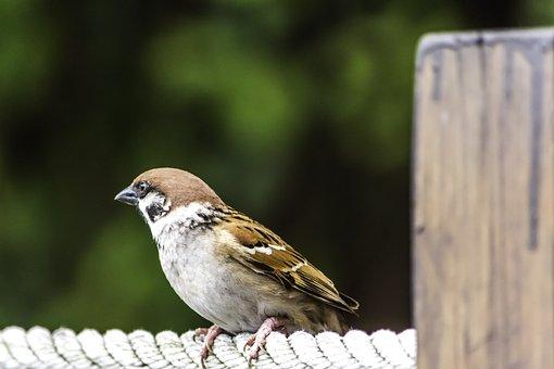 Nature, Outdoors, Bird, Wildlife, Animal, Wood, Little