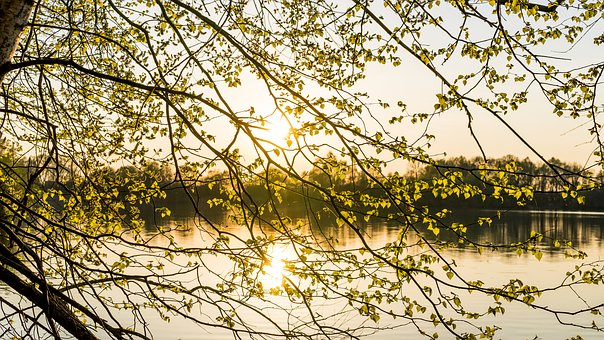 Nature, Tree, Leaves, Spring, Background
