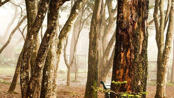 Tree, Nature, Wood, Trunk, Bark, Wallpaper