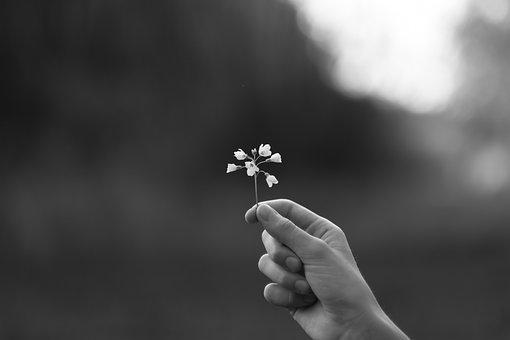 Human, Flower, Black And White Photography, Blossom