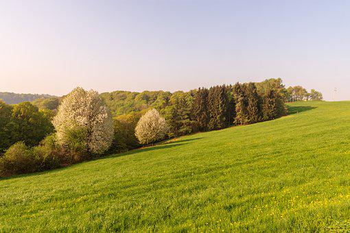 Grass, Nature, Landscape, Field, Summer