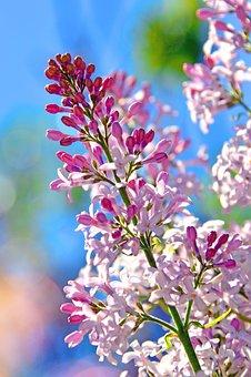 Flower, Plant, Nature, Garden, Petal, Floral, Beautiful