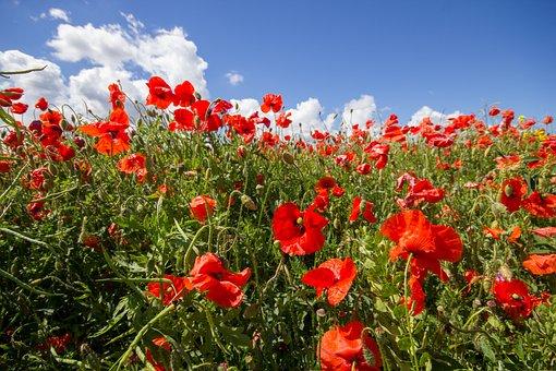 Nature, Flower, Flora, Field, Summer, Hayfield, Garden