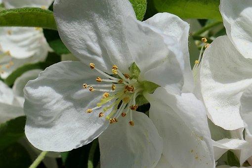 Flower, Plant, Nature, Leaf, Garden, Floral, Petal