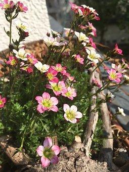 Flower, Nature, Plant, Leaf, Summer, Garden, Flowers