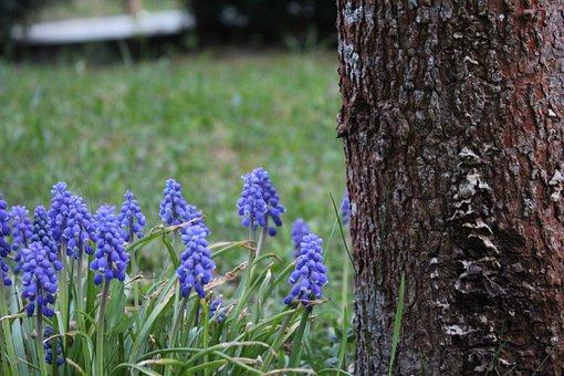 Nature, Plant, Flower, Season, Tree, Summer, Flowers