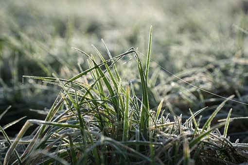Grass, Nature, Flora, Field, Outdoors, Ice, Snow, Cold