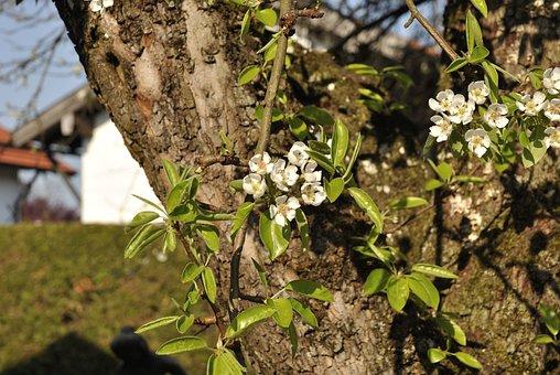 Tree, Nature, Plant, Leaf, Flower, Branch, Season