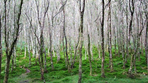 Wood, Nature, Landscape, Tree, Leaf, Tribe