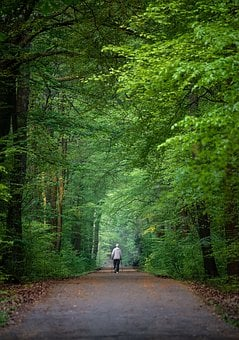 Nordic Walking, Sport, Movement, Forest, Away