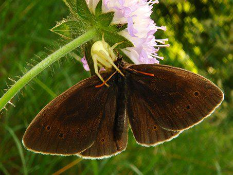 Nature, Butterfly Day, Insect, Summer, Flower, Garden