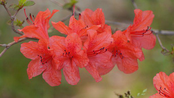 Nature, Flowers, Plants, Garden, Leaf