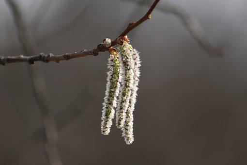 Leann, Nature, Branch, Winter, Tree, Plant, Outdoors
