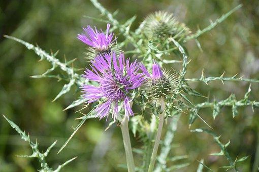 Nature, Flower, Plant, Summer, Field, Fleur Des Champs