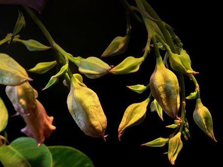 Trasluz, Plant, Branch, Background, Leaves, Fruit
