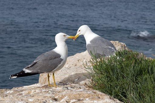 Seagulls, Sea, Nature, Water, Bird, Outdoors, Gulls