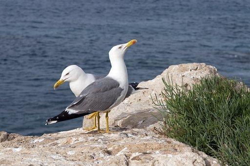 Seagulls, Gulls, Rocks, Ocean, Sea, Water, Nature