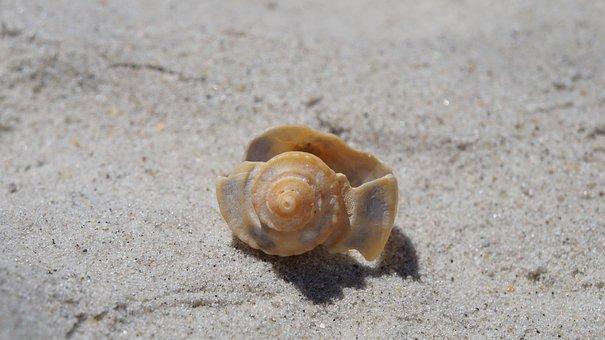 Sand, Beach, Shell, Seashore, Sea, Seashell, Tropical