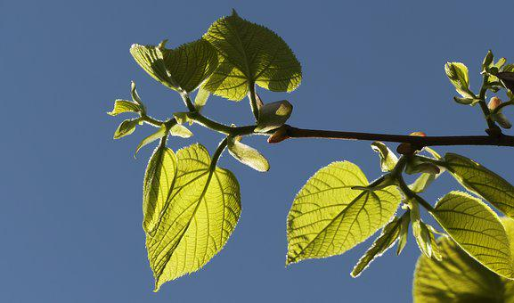 Leaf, Tree, Branches, Knocked Out, Shoots, Nature