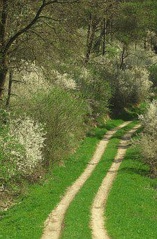 Flowers, Shrubs, Lane, Grass, Nature, Nature Reserve