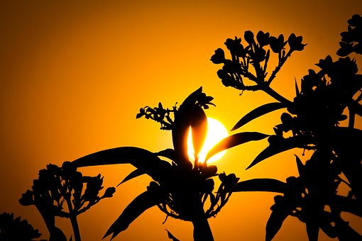 Sunset, Silhouette, Sun, Nature, Tree, Wallpaper