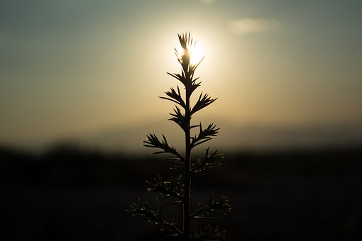 Sunset, Nature, Sky, Dawn, Sun, Outdoors, Tree