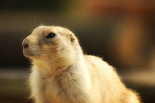 Mammal, Animal World, Cute, Animal, Small, Side View