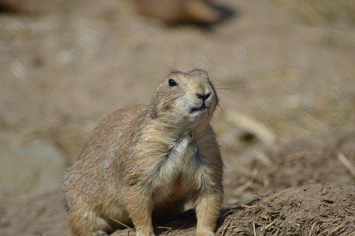 Animal Life, Nature, Animals, Mammal, Small, Outdoor