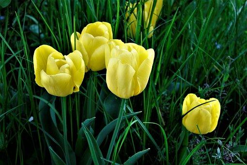 Nature, Flower, Grass, Plant, Garden, Summer, Leaf