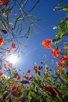 Nature, Leaf, Tree, Flower, Flora