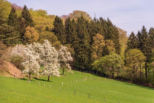 Tree, Nature, Landscape, Grass, Season