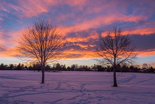 Tree, Nature, Dawn, Winter, Fall, Sunset, Landscape