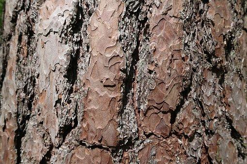 Bark, Tree, Wood, Nature, Texture, Tribe