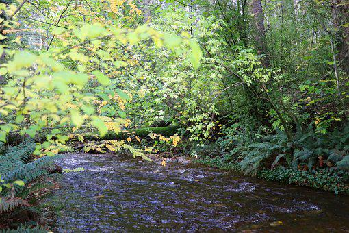Nature, Wood, Water, Leaf, River, Wilderness
