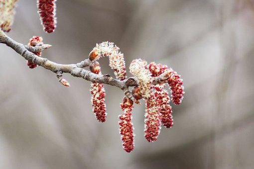 Branch, Winter, Tree, Nature
