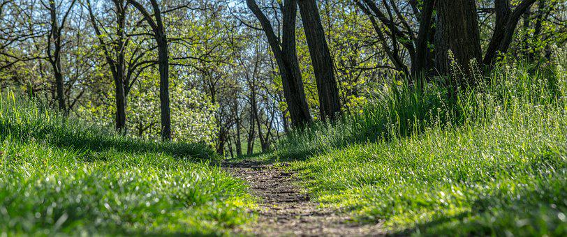 Nature, Path, Wood, Spring, Grass, Road
