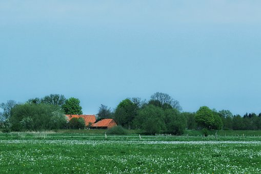 Agriculture, Field, Grass, Nature, Landscape, Meadow